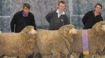 Sheepvention