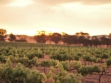DogRock Winery