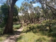 Boronia Peak-08