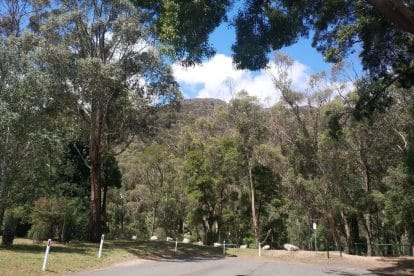 Boronia Peak-12