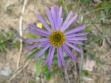 Grampians Wildflower Show 2