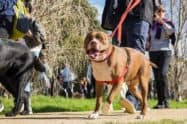 RSPCA Million Paws Walk 2