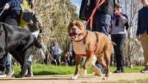 Rspca Million Paws Walk